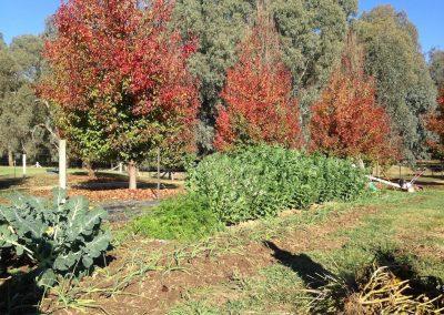 Running a small scale holistic farm – Tarrawalla Farm