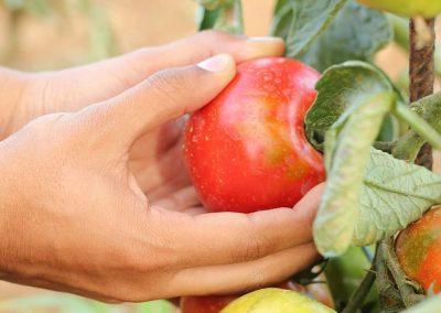 Innovation to reduce food waste on-farm
